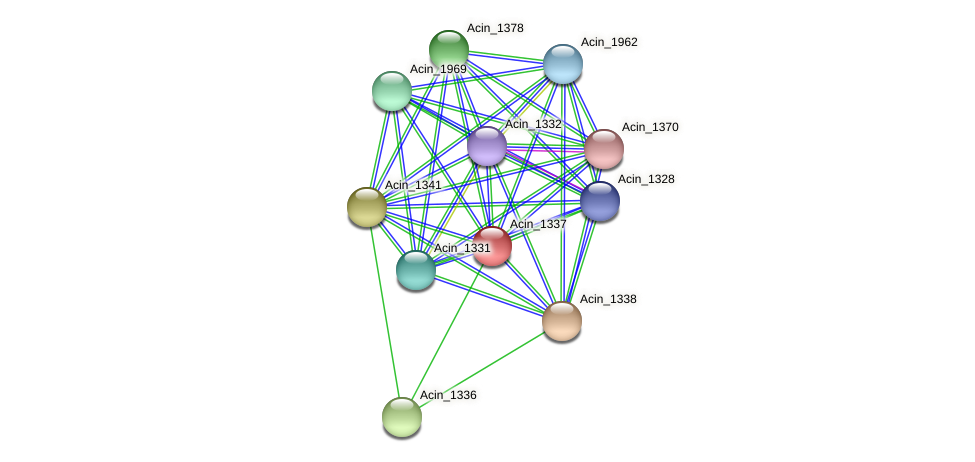 Acin_1337 protein (Acidaminococcus intestini) - STRING interaction network