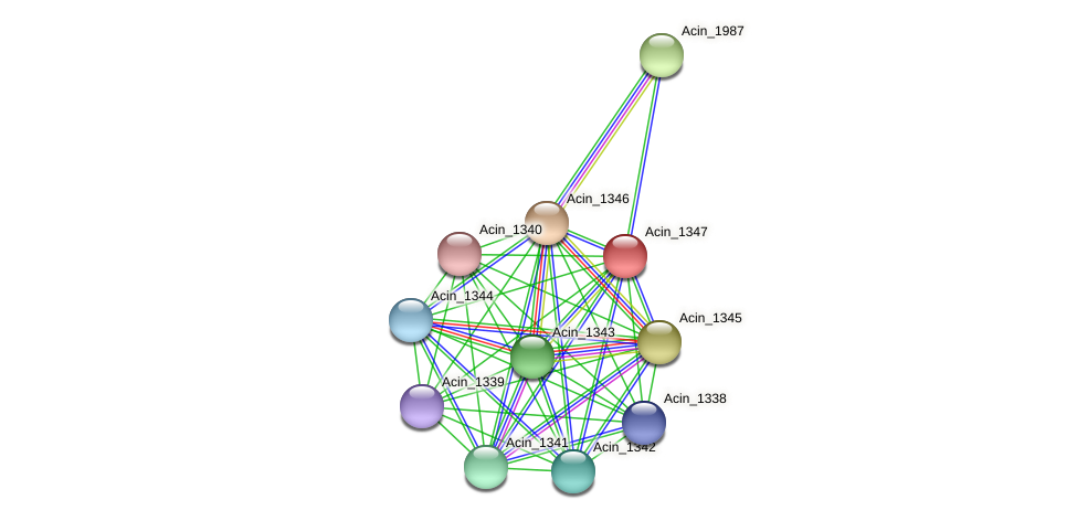 Acin_1347 protein (Acidaminococcus intestini) - STRING interaction network