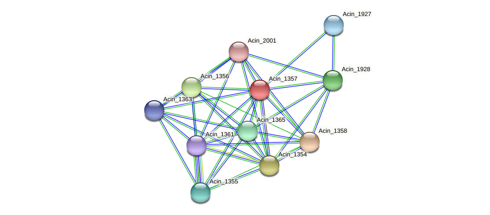 Acin_1357 protein (Acidaminococcus intestini) - STRING interaction network