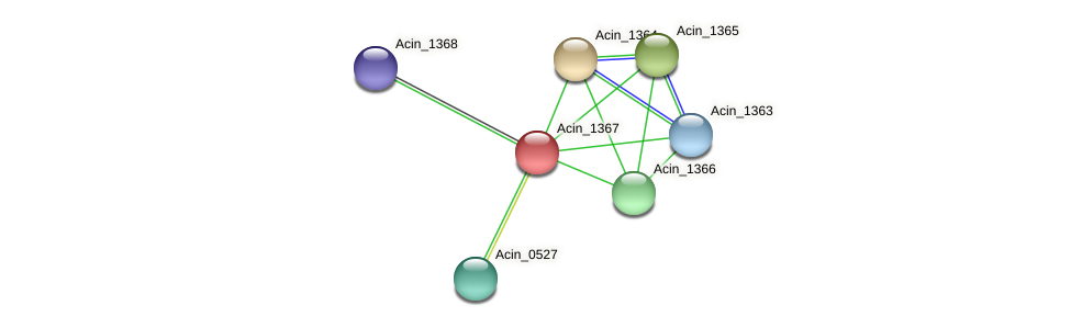 Acin_1367 protein (Acidaminococcus intestini) - STRING interaction network