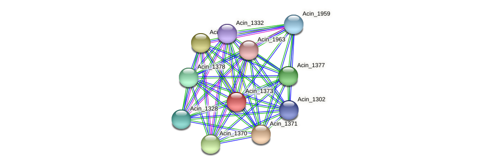 Acin_1373 protein (Acidaminococcus intestini) - STRING interaction network