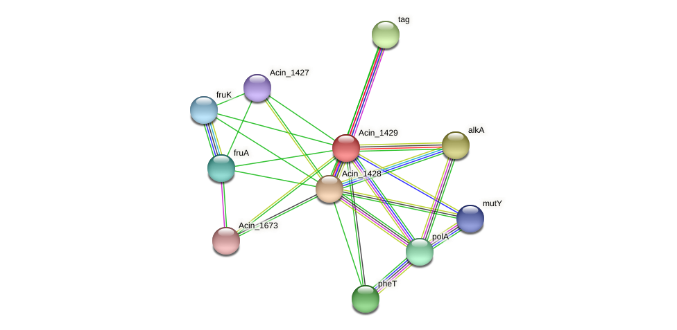 Acin_1429 protein (Acidaminococcus intestini) - STRING interaction network
