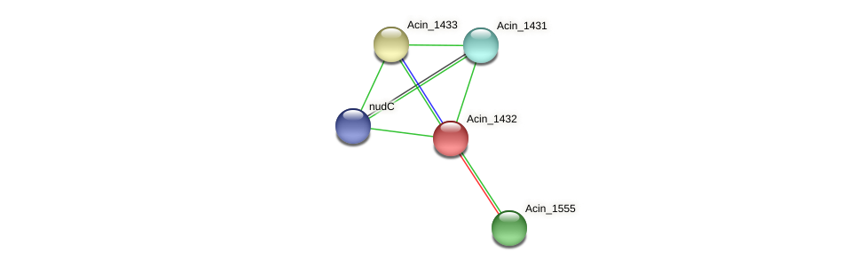 Acin_1432 protein (Acidaminococcus intestini) - STRING interaction network