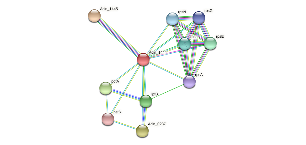 Acin_1444 protein (Acidaminococcus intestini) - STRING interaction network