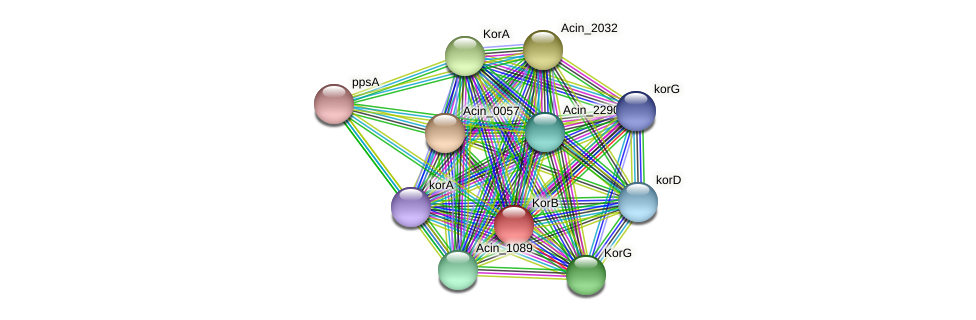Acin_1567 protein (Acidaminococcus intestini) - STRING interaction network
