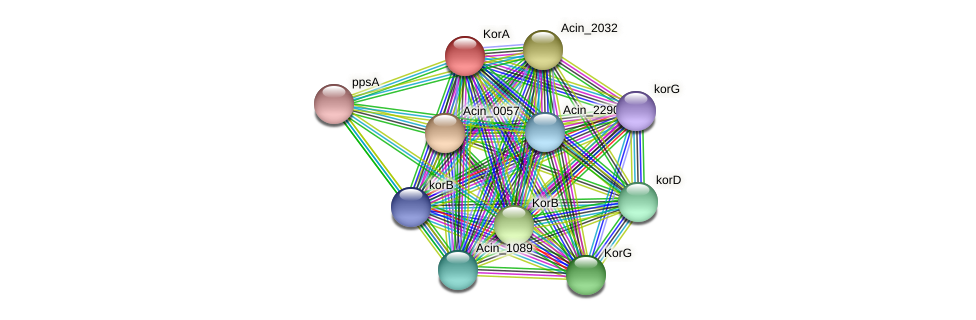 Acin_1568 protein (Acidaminococcus intestini) - STRING interaction network