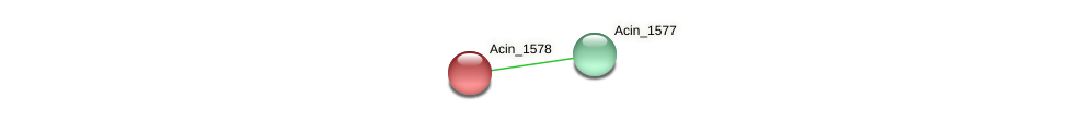 Acin_1578 protein (Acidaminococcus intestini) - STRING interaction network