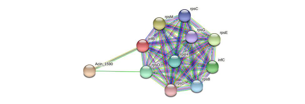 infB protein (Acidaminococcus intestini) - STRING interaction network