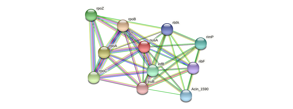 nusA protein (Acidaminococcus intestini) - STRING interaction network
