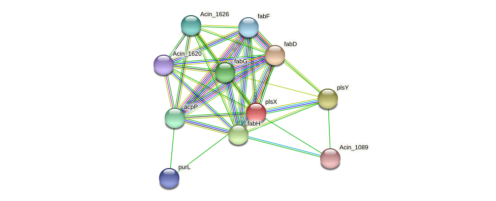plsX protein (Acidaminococcus intestini) - STRING interaction network