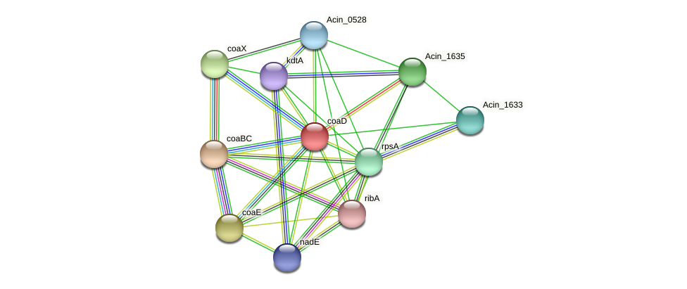 coaD protein (Acidaminococcus intestini) - STRING interaction network