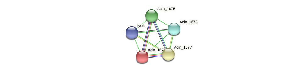 Acin_1676 protein (Acidaminococcus intestini) - STRING interaction network