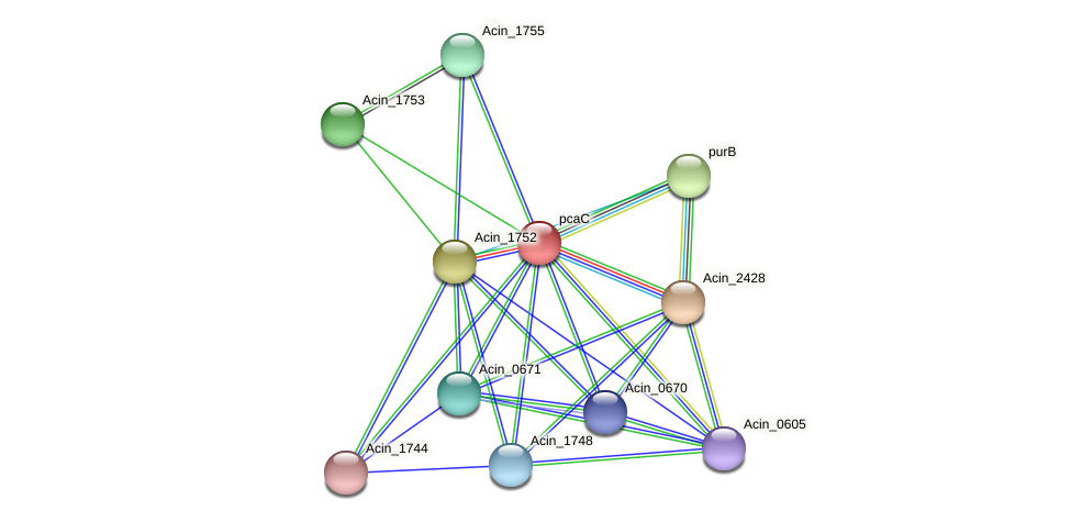 pcaC protein (Acidaminococcus intestini) - STRING interaction network