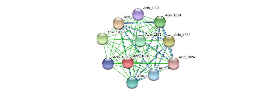 Acin_1830 protein (Acidaminococcus intestini) - STRING interaction network