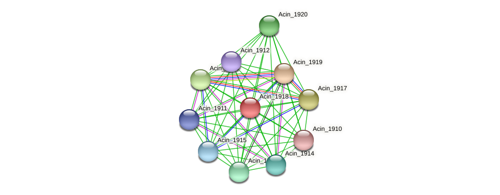 Acin_1918 protein (Acidaminococcus intestini) - STRING interaction network