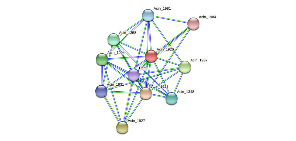 Acin_1926 protein (Acidaminococcus intestini) - STRING interaction network