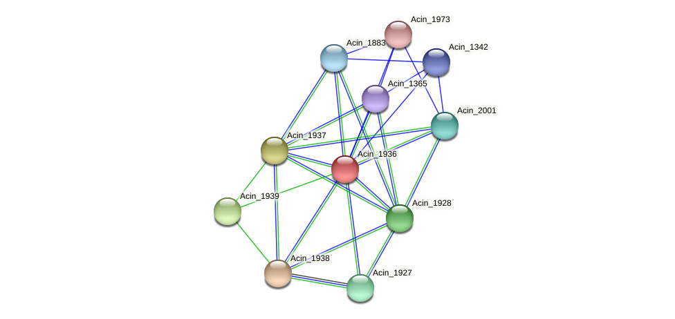 Acin_1936 protein (Acidaminococcus intestini) - STRING interaction network