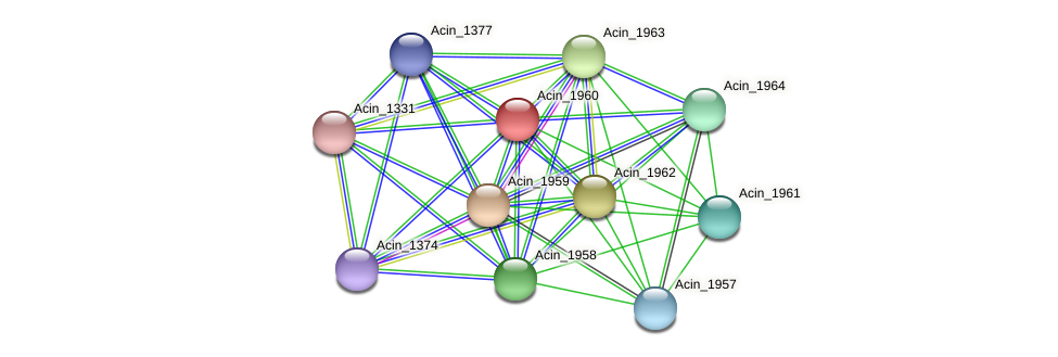 Acin_1960 protein (Acidaminococcus intestini) - STRING interaction network