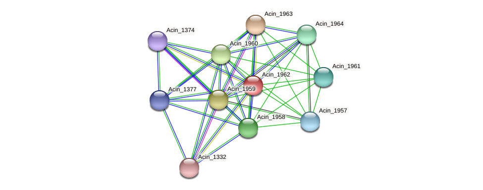 Acin_1962 protein (Acidaminococcus intestini) - STRING interaction network