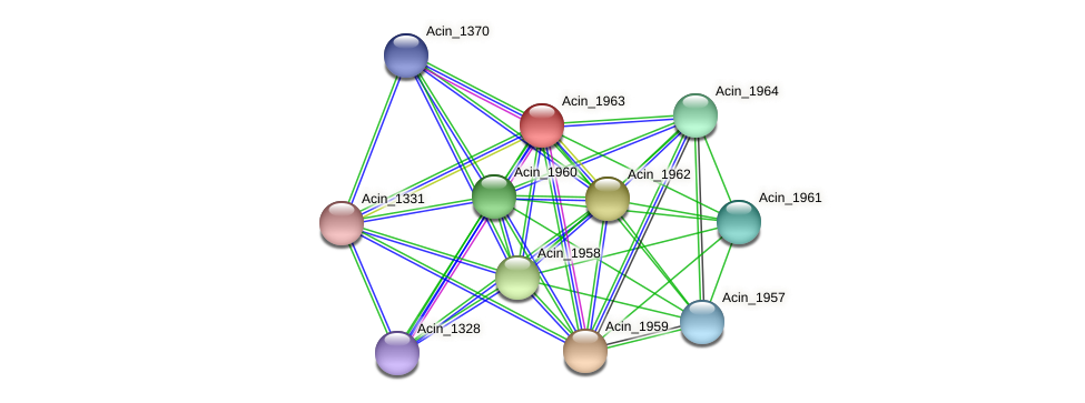 Acin_1963 protein (Acidaminococcus intestini) - STRING interaction network