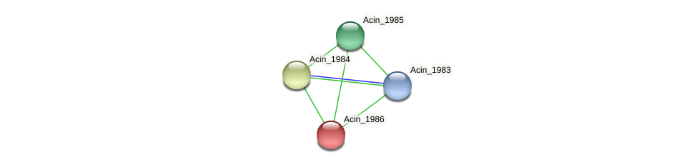 Acin_1986 protein (Acidaminococcus intestini) - STRING interaction network