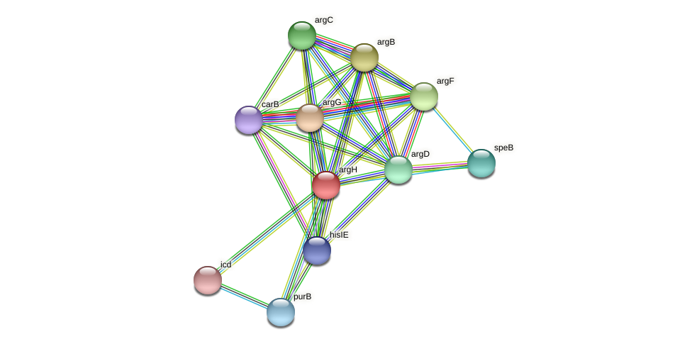argH protein (Acidaminococcus intestini) - STRING interaction network