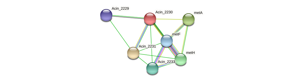 Acin_2230 protein (Acidaminococcus intestini) - STRING interaction network