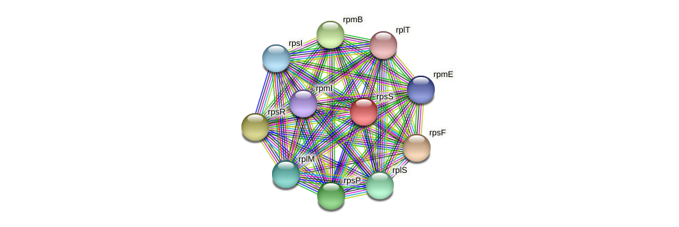rpsS protein (Acidaminococcus intestini) - STRING interaction network