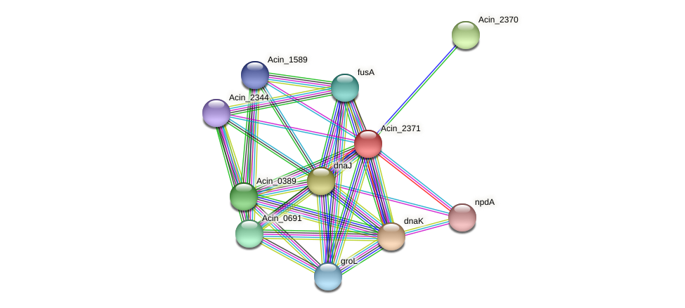 Acin_2371 protein (Acidaminococcus intestini) - STRING interaction network