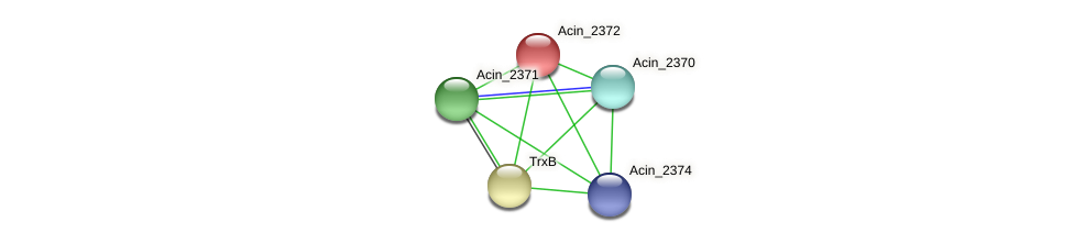 Acin_2372 protein (Acidaminococcus intestini) - STRING interaction network