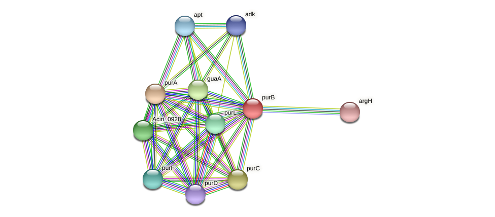 purB protein (Acidaminococcus intestini) - STRING interaction network