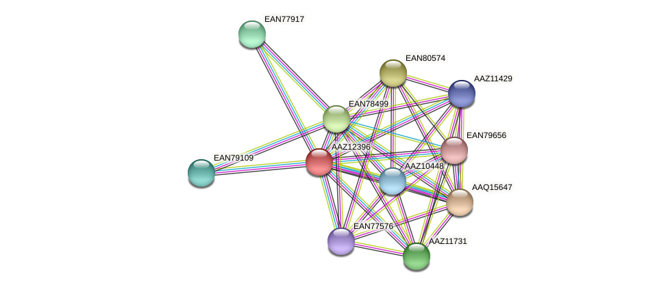 AAZ12396 protein (Trypanosoma brucei) - STRING interaction network