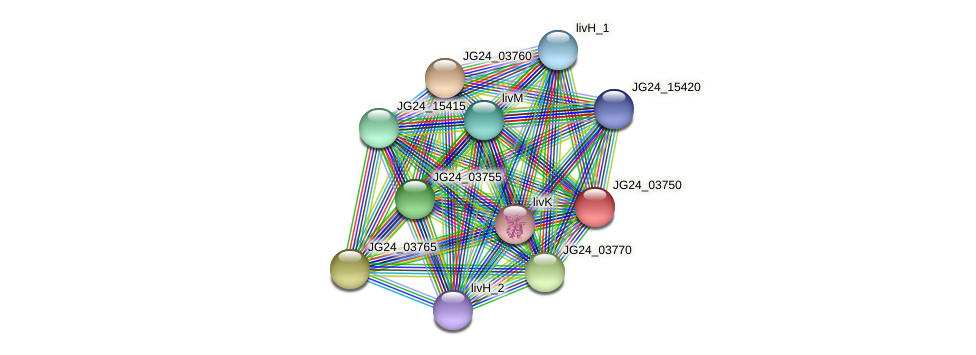 JG24_03750 protein (Klebsiella pneumoniae) - STRING interaction network