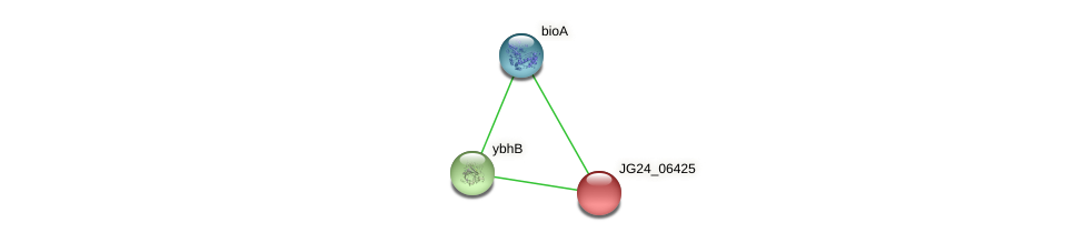 JG24_06425 protein (Klebsiella pneumoniae) - STRING interaction network