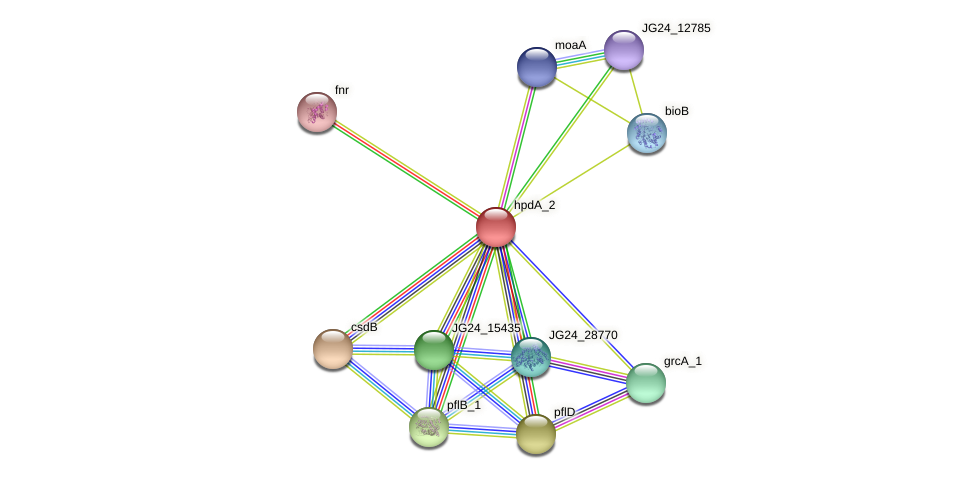 JG24_06760 protein (Klebsiella pneumoniae) - STRING interaction network