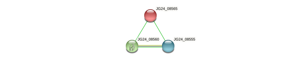JG24_08565 protein (Klebsiella pneumoniae) - STRING interaction network