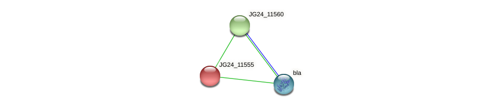 JG24_11555 protein (Klebsiella pneumoniae) - STRING interaction network