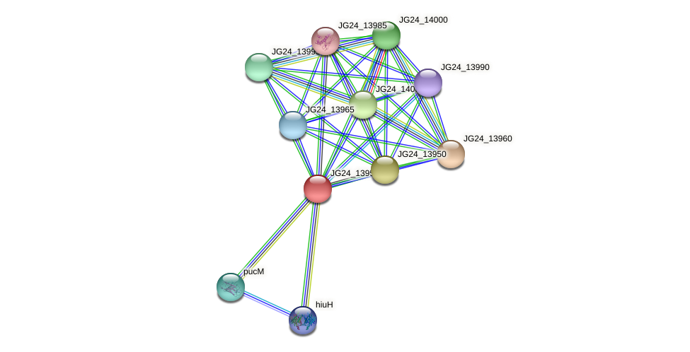 JG24_13955 protein (Klebsiella pneumoniae) - STRING interaction network