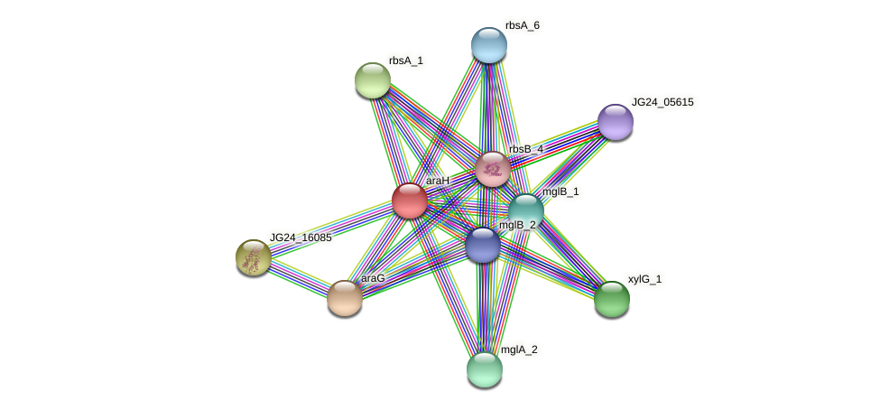 araH protein (Klebsiella pneumoniae) - STRING interaction network