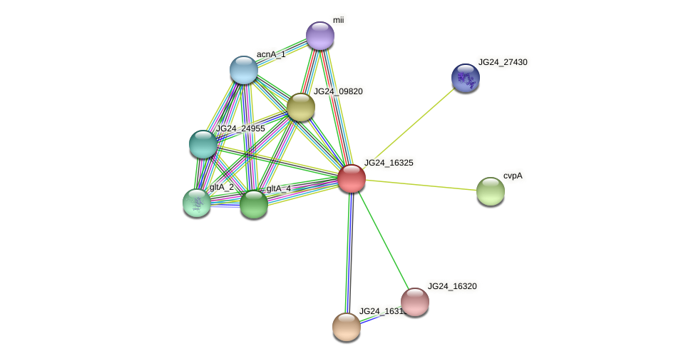 JG24_16325 protein (Klebsiella pneumoniae) - STRING interaction network