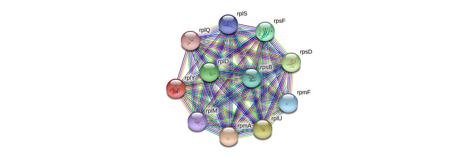 rplY protein (Klebsiella pneumoniae) - STRING interaction network