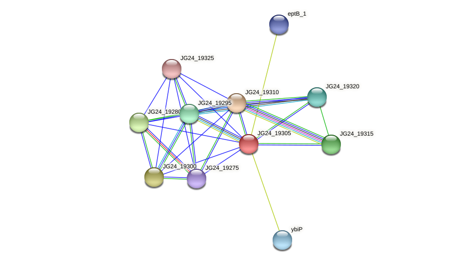 JG24_19305 protein (Klebsiella pneumoniae) - STRING interaction network