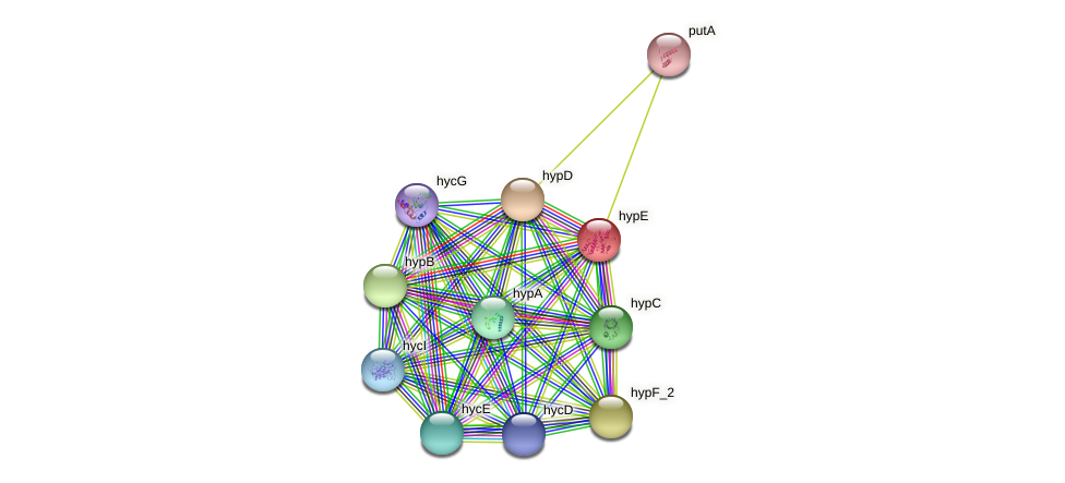 JG24_19885 protein (Klebsiella pneumoniae) - STRING interaction network