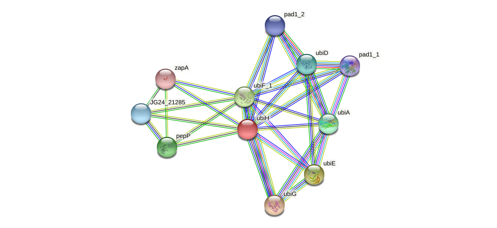 JG24_21275 protein (Klebsiella pneumoniae) - STRING interaction network