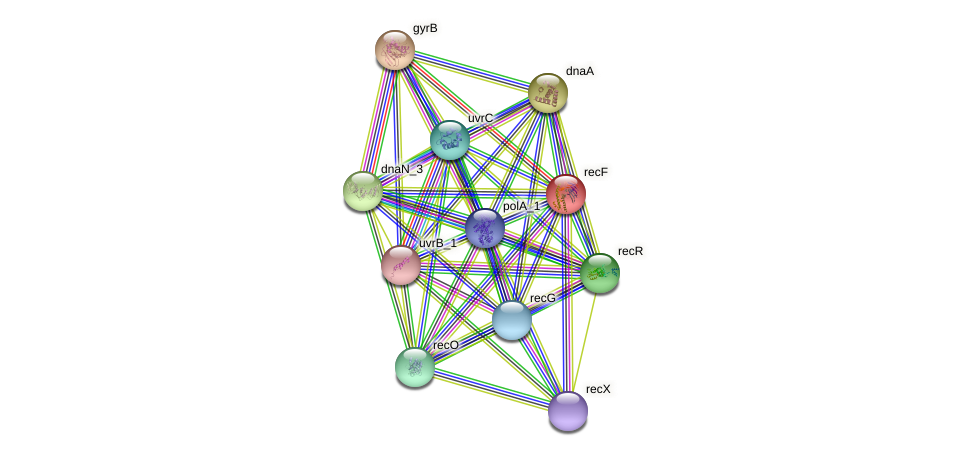 recF protein (Klebsiella pneumoniae) - STRING interaction network
