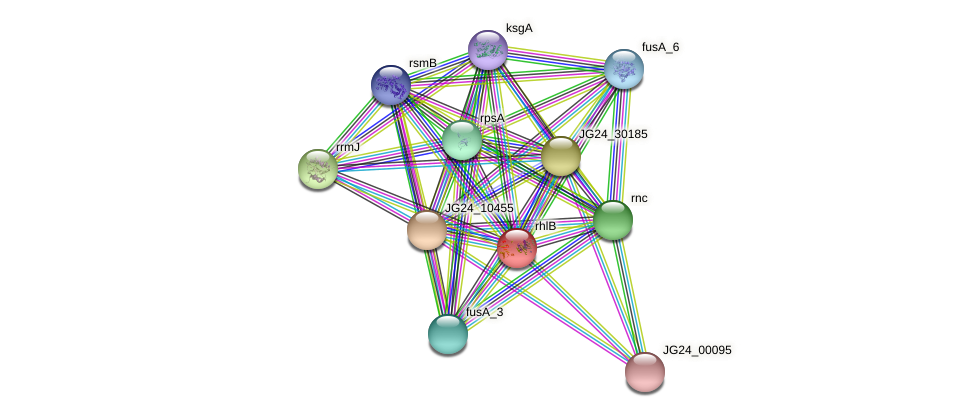 rhlB protein (Klebsiella pneumoniae) - STRING interaction network