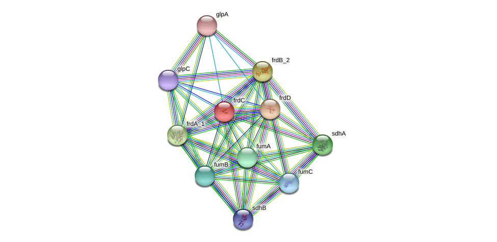 frdC protein (Klebsiella pneumoniae) - STRING interaction network