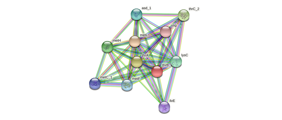 thrB protein (Klebsiella pneumoniae) - STRING interaction network