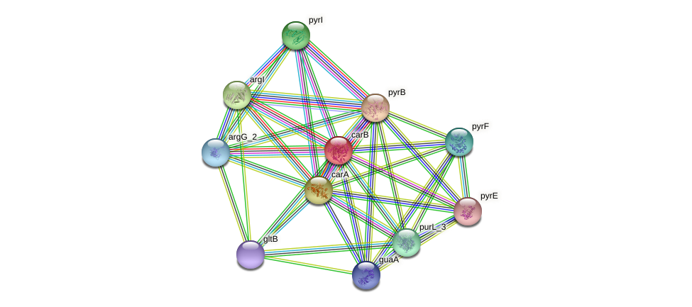 carB protein (Klebsiella pneumoniae) - STRING interaction network