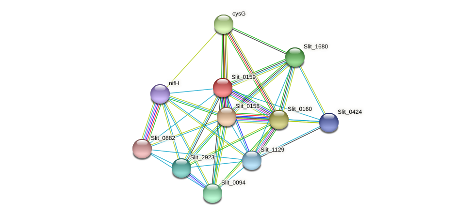 Slit_0159 protein (Sideroxydans lithotrophicus) - STRING interaction network